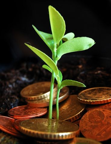 Image of a young plant growing in a plate pull of coins
